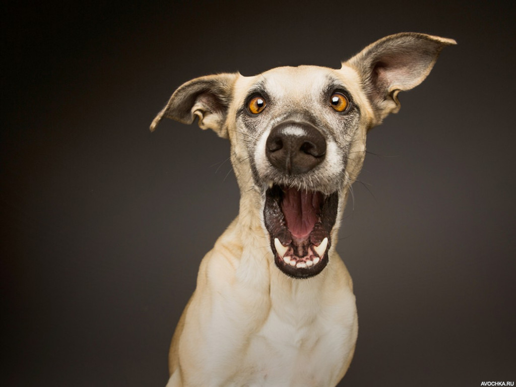 Новым наступающим, прикол картинки с собаками
