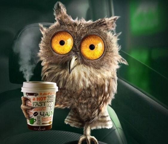 скачать сова кофе